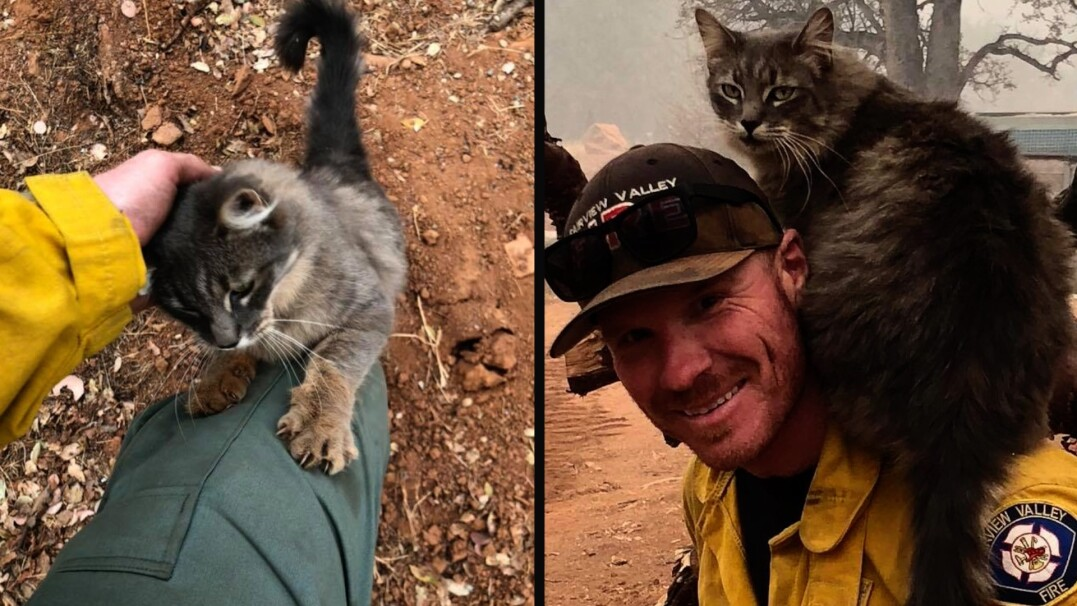 Strażak uratował kota, ten podziękował mu w typowo koci sposób