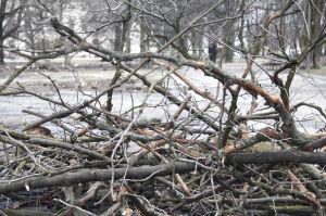 Prokuratura odmówiła śledztwa w sprawie Ogrodu Krasińskich