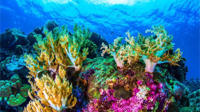 Polacy odkrywają tajemnice koralowców