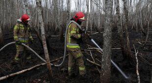 Dyrektor Biebrzańskiego Parku Narodowego Andrzej Grygoruk o stratach po pożarze