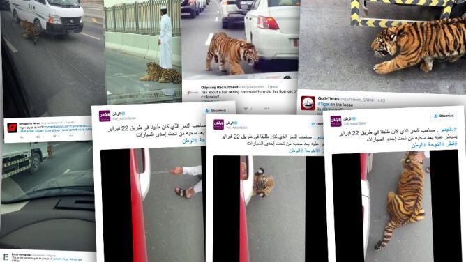 Tygrys wstrzymał ruch na autostradzie